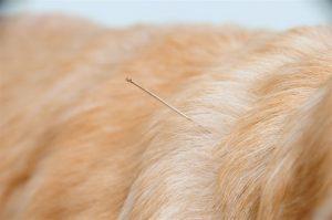 רפואה משלימה לכלבים