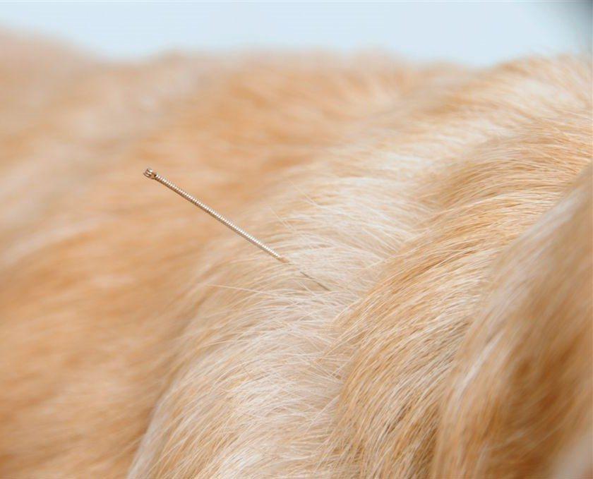 טיפולי רפואה משלימה לכלבים