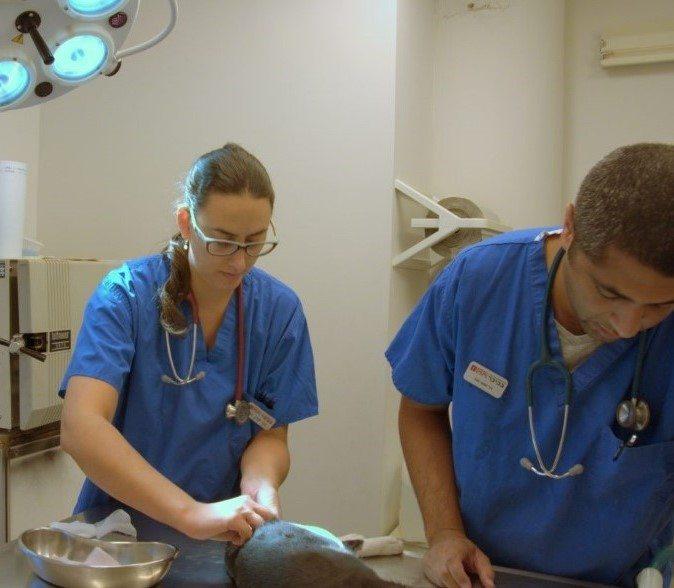 anesthesia-procedure-main