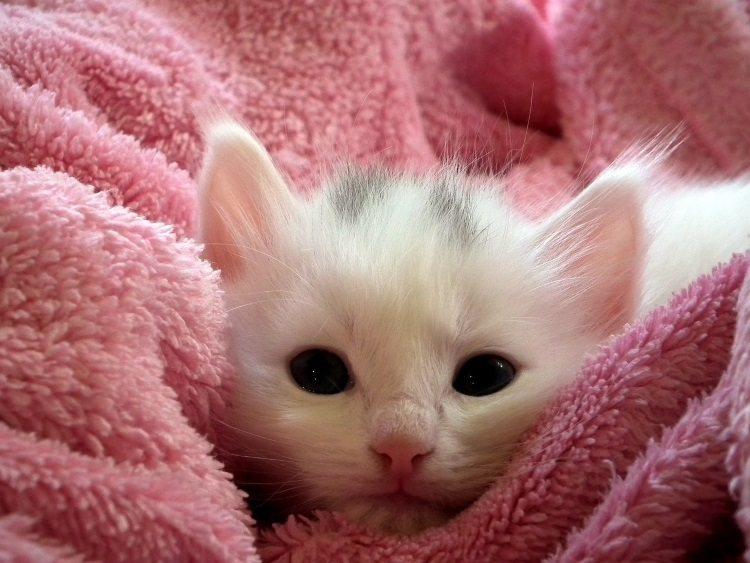 כיצד להבחין במחלות נפוצות אצל חתולים