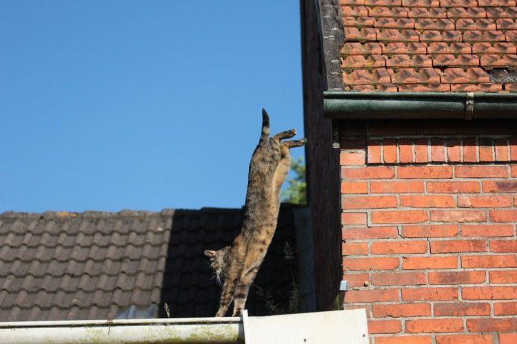נפילה מגובה בחתולים