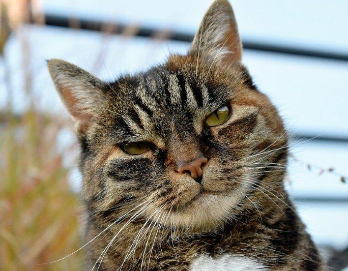 החתול שלי מקיא