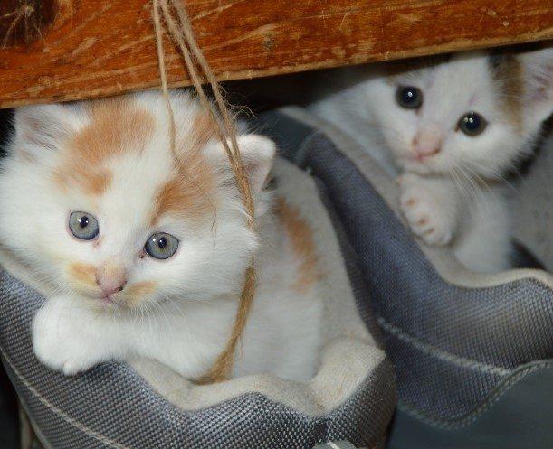 המדריך לגידול גורי חתולים