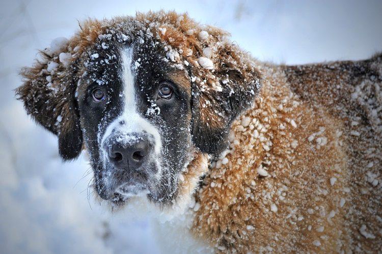 תזונה נכונה לכלבים וחתולים בחורף