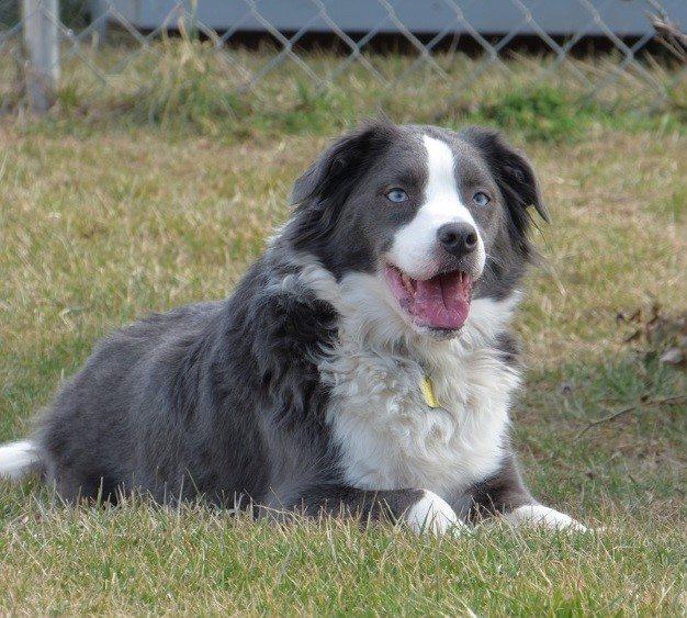 דלקת ברחם לכלבות
