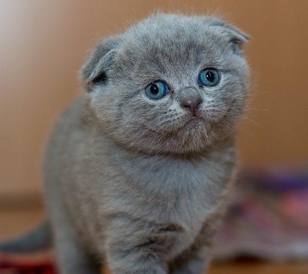kitten-treetment-main