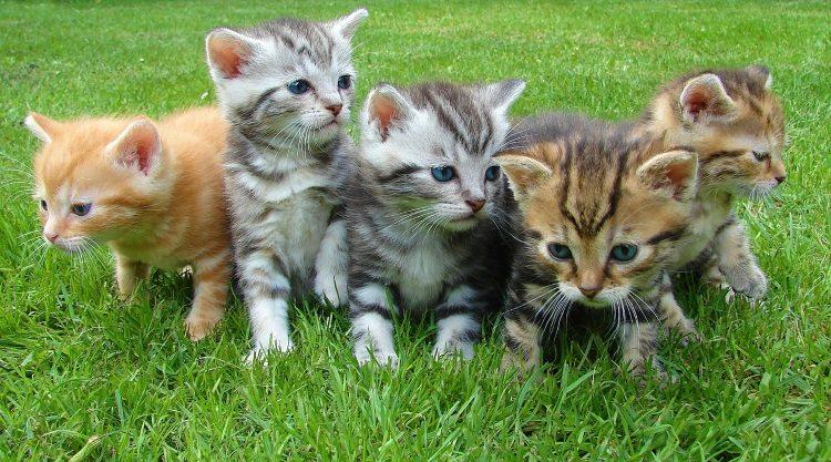 טיפים למגדלי חתולים