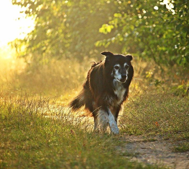 מוטציה MDR1 בכלבים