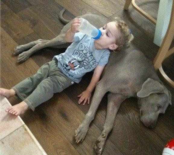 כלב חדש בבית - איך מטפלים