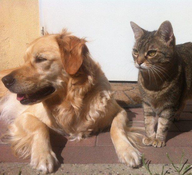 pet-care-rules-main