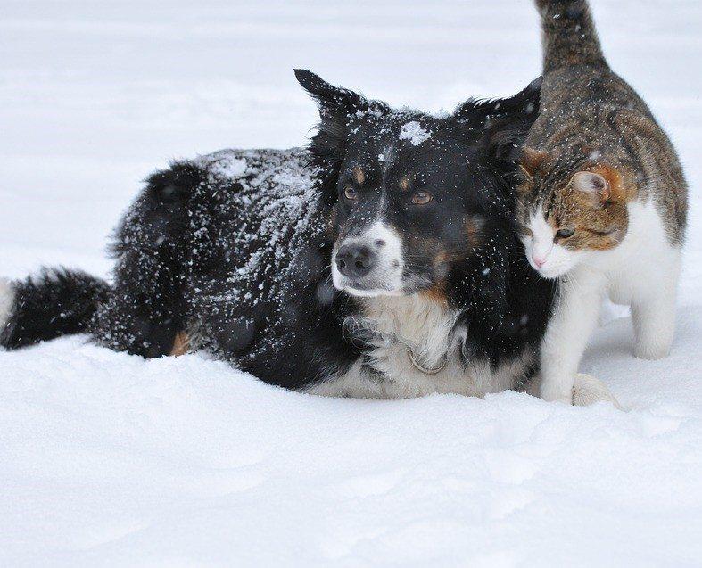 הכן את חיית המחמד לחורף