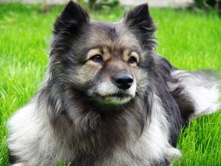 pretty-dog