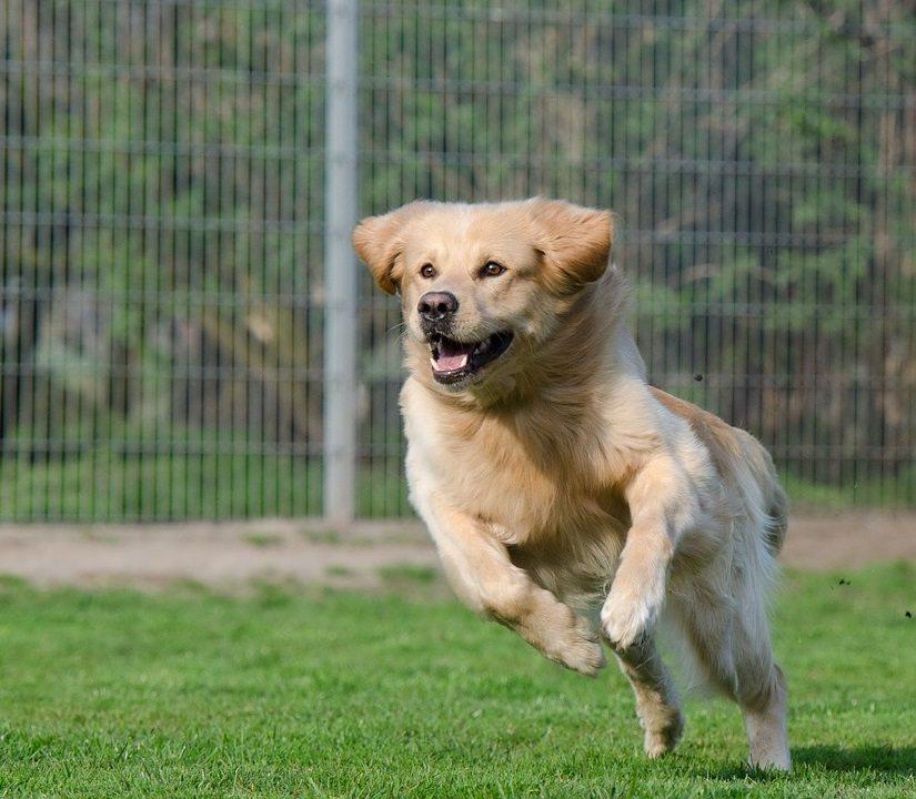 פעילות גופנית לכלבים