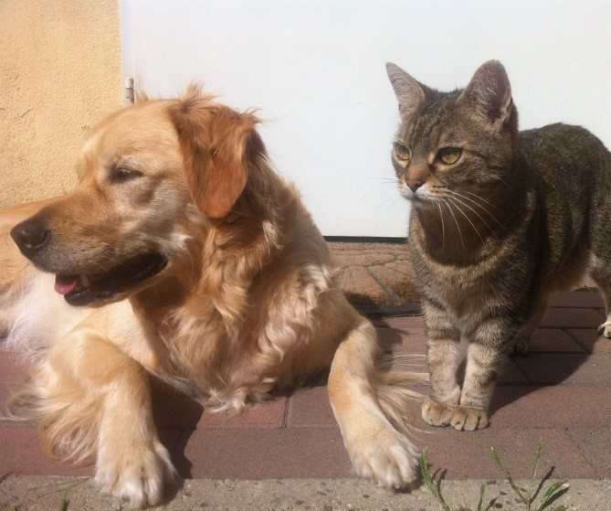 cats-and-dogs-pic