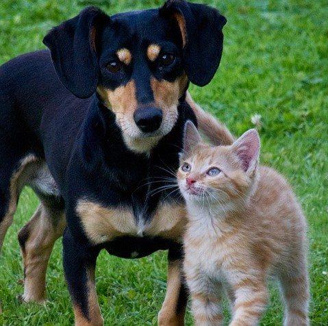 כלבים וחתולים בקיץ